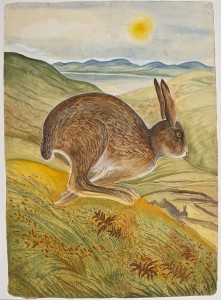Pauline Bewick (b.1935) The Irish Hare Acrylic (3,000-5,000).