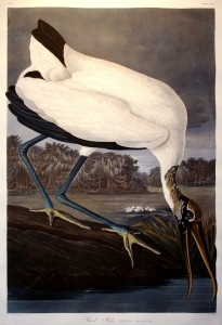 Arader Galleries. John James Audubon (1785-1851), Wood Ibis from The Birds of America. Engraved by Robert Havell (1793-1878). London, 1838. Aquatint engraving with original hand coloring.