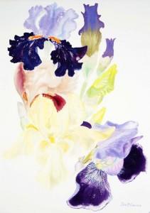 Cayeux Irises by Ivor Coburn.
