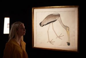 The Kennedy Stork from the Lady Impey series made £245,000.